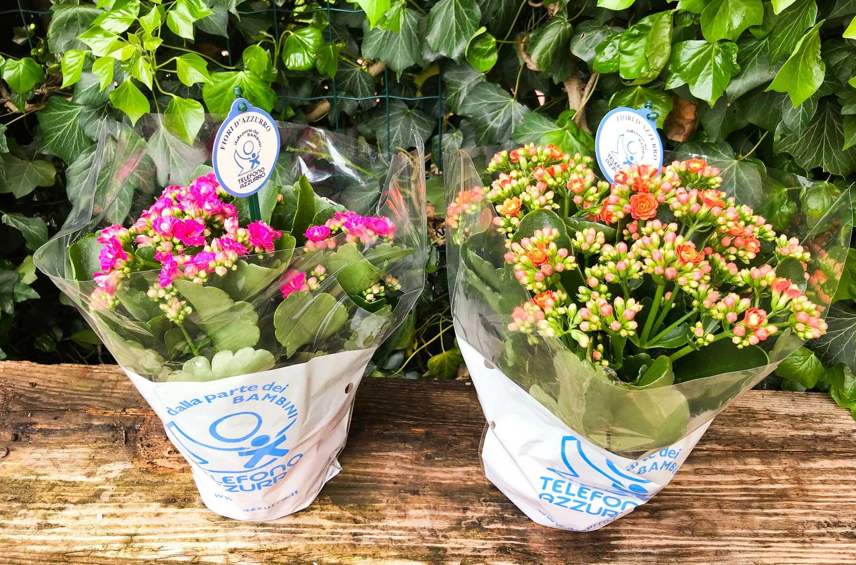 Fiori d'Azzurro, ferma la volenza con un fiore
